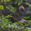 今日の鳥コレクション・・・不安定な枝にとまって