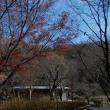 師走の鎌倉中央公園と東京駅のイルミネーション