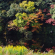 池の紅葉とカワウ