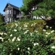 旧古河庭園(紅葉)