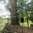 街歩き 第68回 『東京十社巡り 「王子神社」』