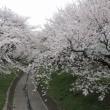 桜の季節になりました お知らせ