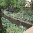 用水路でアオサギ発見