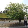 「桜」管理