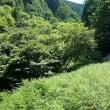 駒の尾~後山~鍋が森神社奥の院