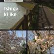 石垣池公園へ花見