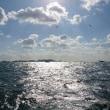 ヤザワ渡船 ネレウス 32