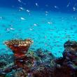 カメとダイビング。沖縄ダイビング 那覇シーマリン