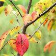 公園での秋探し‥⑧