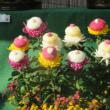 善養寺の菊花展 (2)