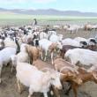 草原の国モンゴル紀行①・・・草原(ステップ)の国モンゴル・・・アルドゥラーンの遊牧地で