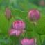 蛍の撮影は難しかったけど雨中の明日香はそれなりに