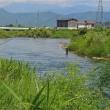 魚野川の鮎釣りポイント
