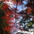 岩古谷山に登りました。(11/23)