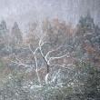 2653 一本の木