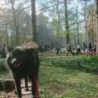 午後のお散歩『円山公園』