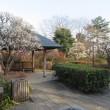 東京 中野の哲学堂公園の梅園