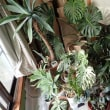 植物の置き場所