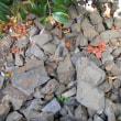 石堂層の化石
