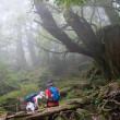 霧につつまれながら【屋久島白谷雲水峡ガイドツアー】