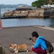 ゴールデンウィークの旅行(渡鹿野島)