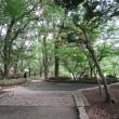 丸山公園の夏