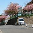 2018.2.17 チーズフォンデュと三浦海岸桜