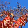 鶴見緑地の秋 頑張ってます。