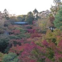 京都の紅葉(2018/11/10)今日の東福寺