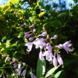 お彼岸の庭の花