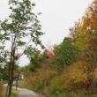 里山ワークショップ開催。野鳥と木の実。