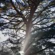 12月7日  雑木林光芒