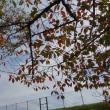 秋も真っ只中