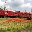 彼岸花の咲く踏切附近を通過する鉄道車両 2018.09.18
