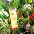 TROPICAL FAIR 2018~太陽の花~