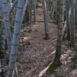 「高佐砦」への登山道の入り口から登り始めるとすぐに竹林がありました。 (Photo No.14231)