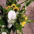 ズッキーニの花に蜜蜂