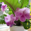 花と写真の會
