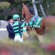 6歳牝馬 サザナミ・モルジアナが引退に