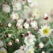 2/16  今日の花たち・春の花が増えて来ましたね