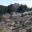 梅の咲く風景
