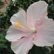 ハイビスカスワールド(咲くやこの花館)