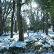 雪の淵野辺公園