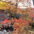高尾山の紅葉とよみうりランドのイルミネーション