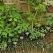 我が家松田家の小さな自然観察スペース -箱舟の庭-