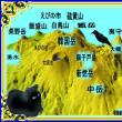 「鉢かづきヒメ」の由来・・・「初瀬山の長谷観音にちなんで付けられた初瀬姫」・・・