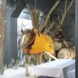 「戦争にいった馬たち」展