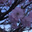 728;春の眠り