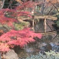 少し色あせた紅葉の六義園