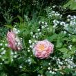 ローズガーデンのバラ